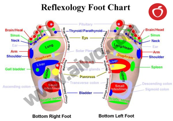Weight loss in 10 days - www. aiwo.com -ketogenic diet - Reflexology points on ReflexFoot
